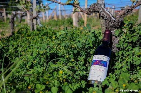 L'omniprésence de la vigne