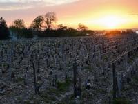 Lever de soleil sur les vignes de St Julien